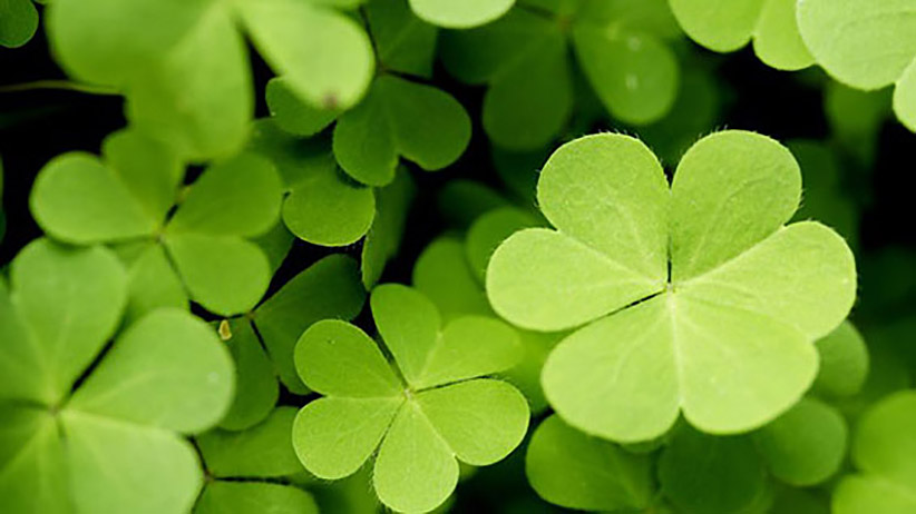 Feeling Lucky 7 Quick Ways To Improve Your Chances At